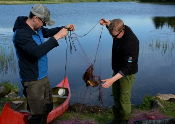 Knute på tråden... Foto: Ellen Marie Hagevik