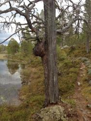 Naturen lager mange interessante former.